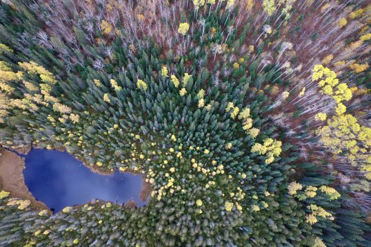 drone view of a forest by craig heinrich