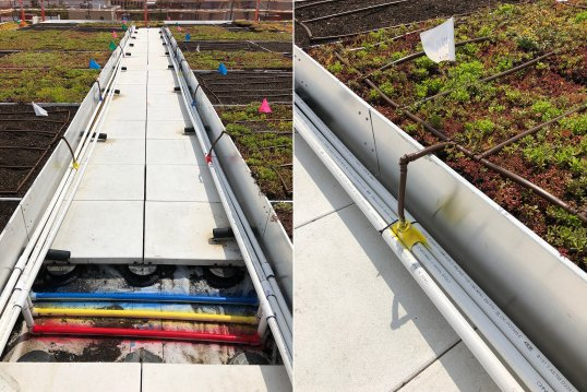 Cistern collected runoff versus potable water irrigation systems are tested on the One Spadina roof
